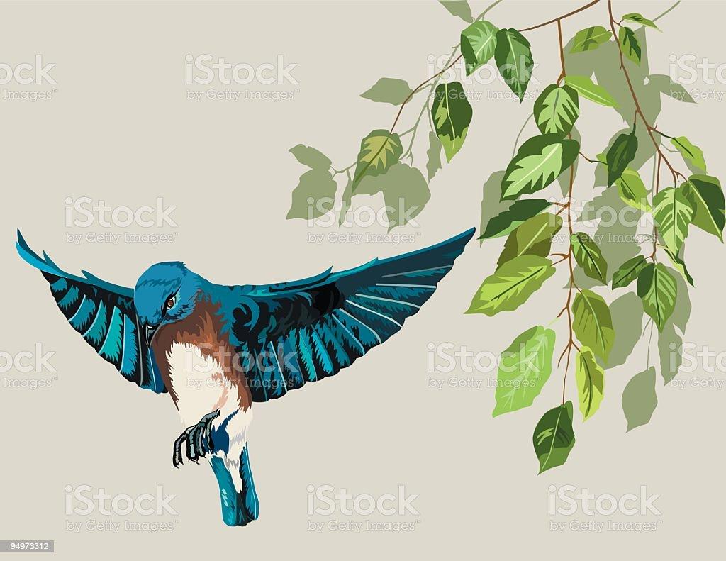 Eastern Bluebird & Birch vector art illustration