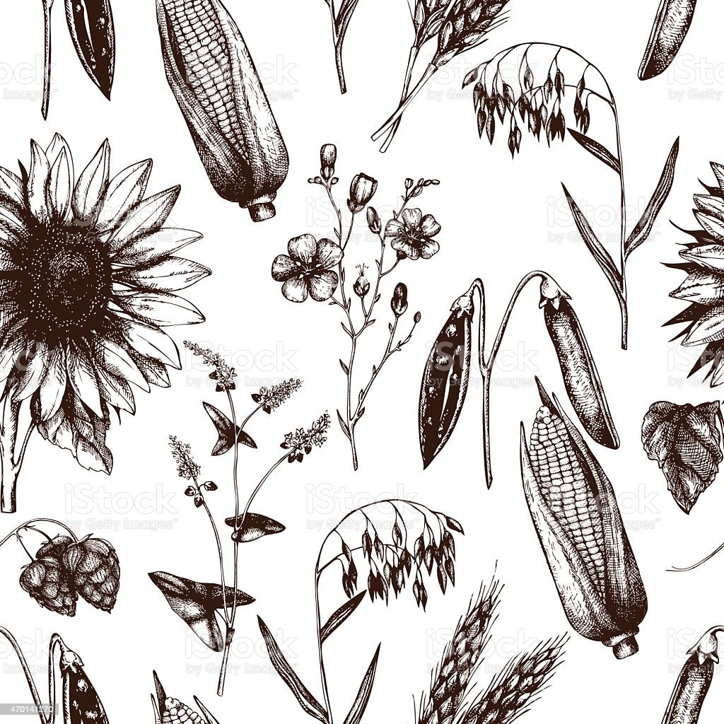 Eco food and plants. Vintage background vector art illustration