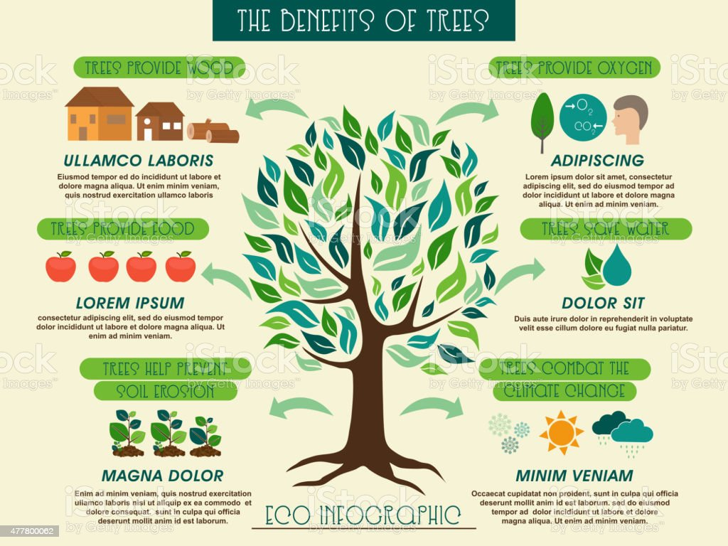 the benefits of trees A tree is a tall plant with a trunk and branches made of wood trees can live for many years the oldest tree ever discovered is approximately 5,000 years old.