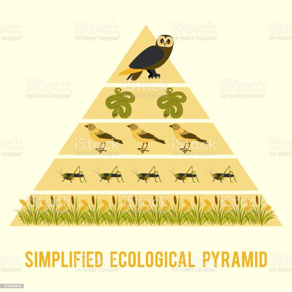 Ecosystem energy flow. vector art illustration