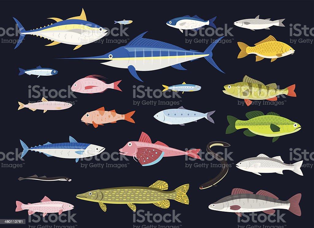 Edible Fishes vector art illustration