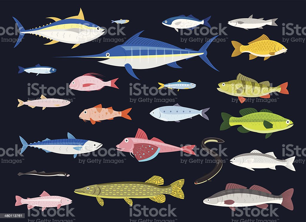 Edible Fishes vector art illustration