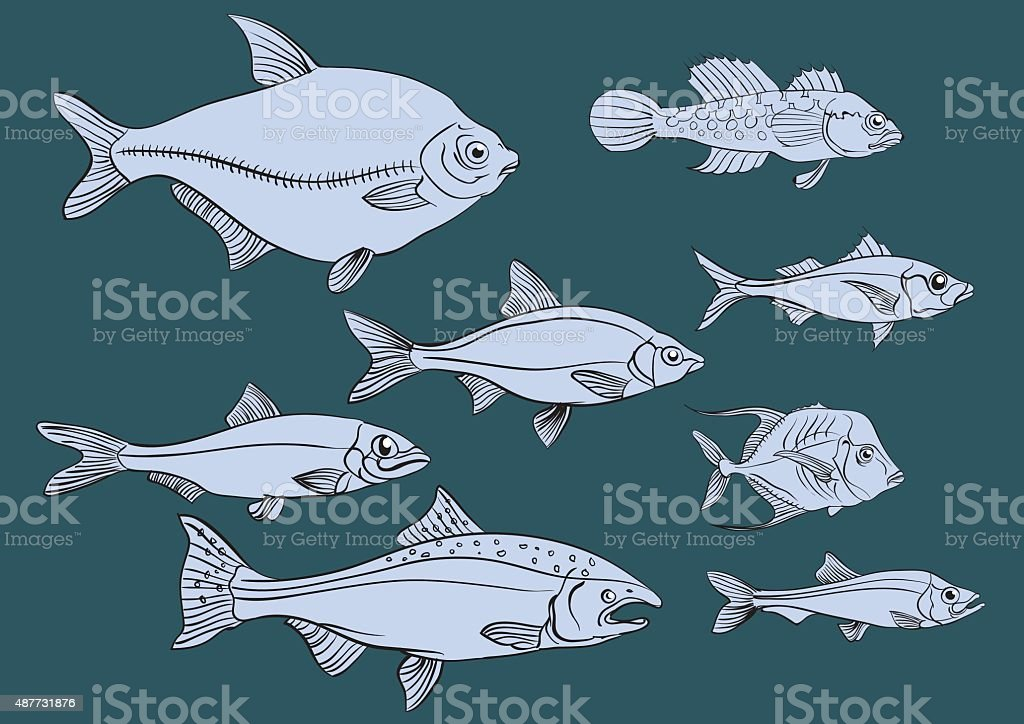 Edible marine and freshwater fish vector art illustration