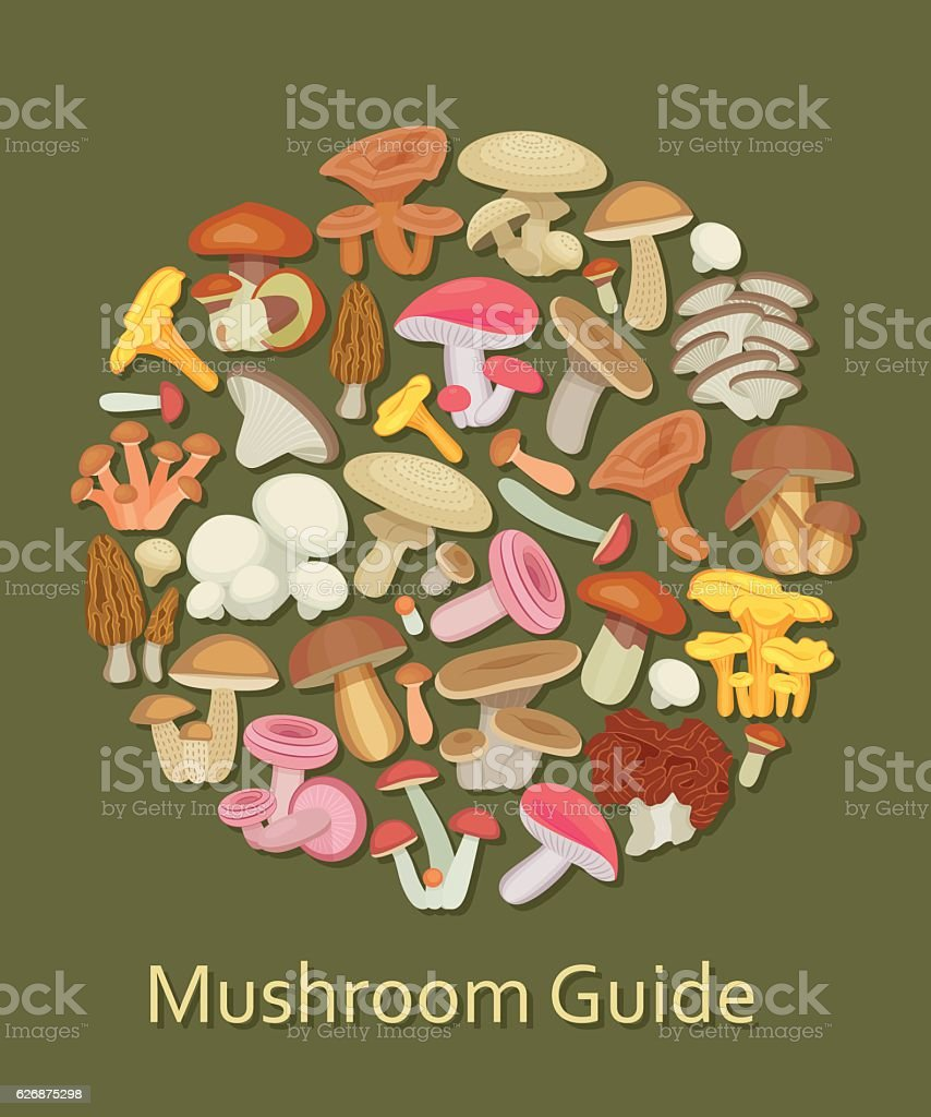 Edible mushroom set vector art illustration