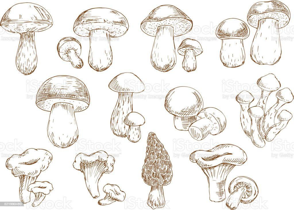 Edible mushrooms sketch drawing icons vector art illustration