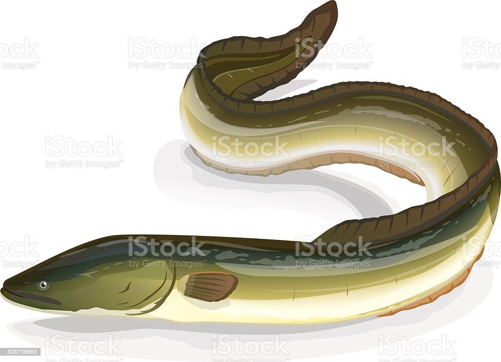 Eel fish royalty-free stock vector art