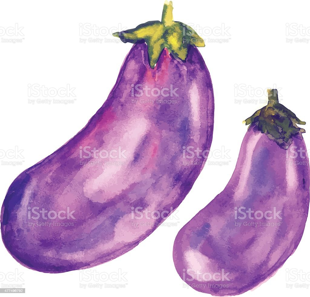 Eggplants set - watercolor hand painted illustration vector art illustration