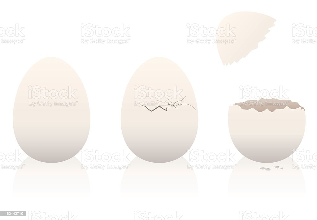 Eggs Intact Broken Open Eggshell vector art illustration