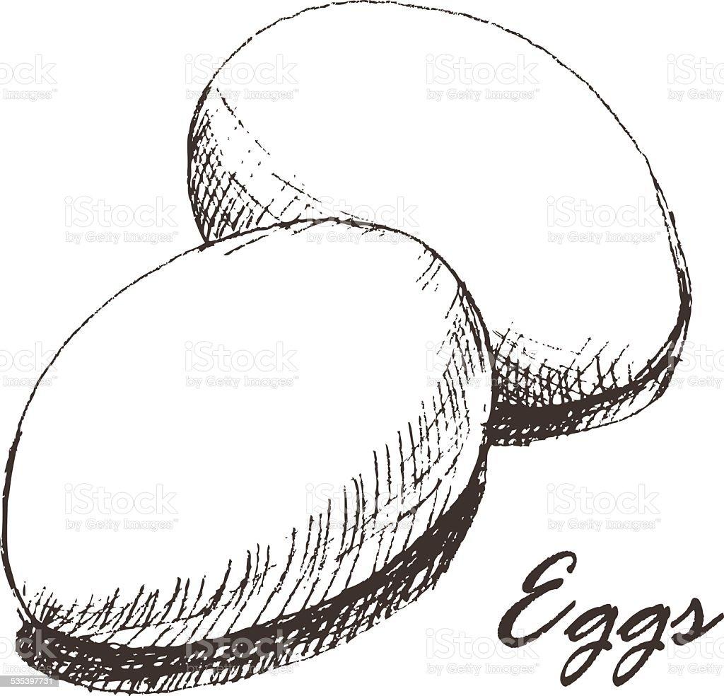 eggs sketch vector art illustration
