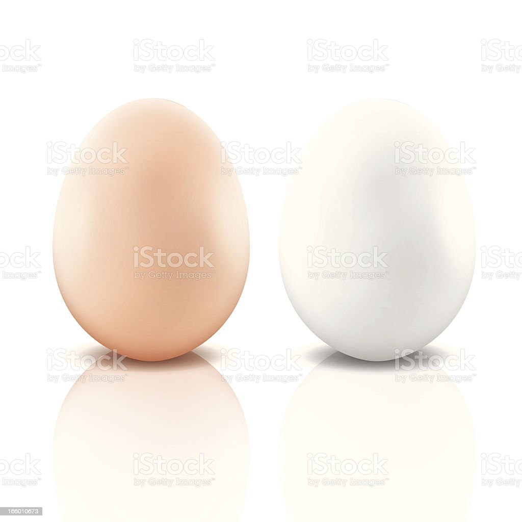 Eggs vector art illustration