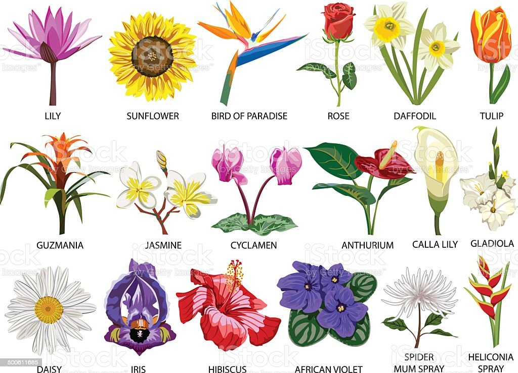 Цветы с названиями цветов на русском 80