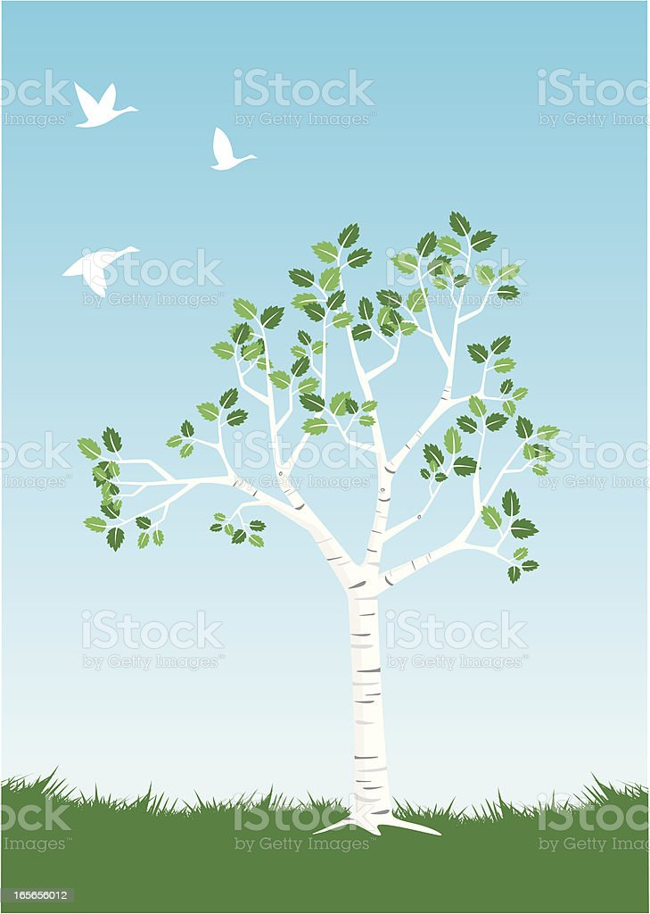 Elegant Birch Springtime royalty-free stock vector art