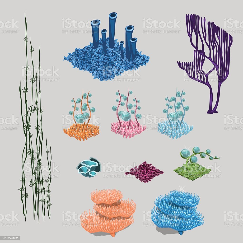 Elements of reef, algae, corals and sea flowers vector art illustration