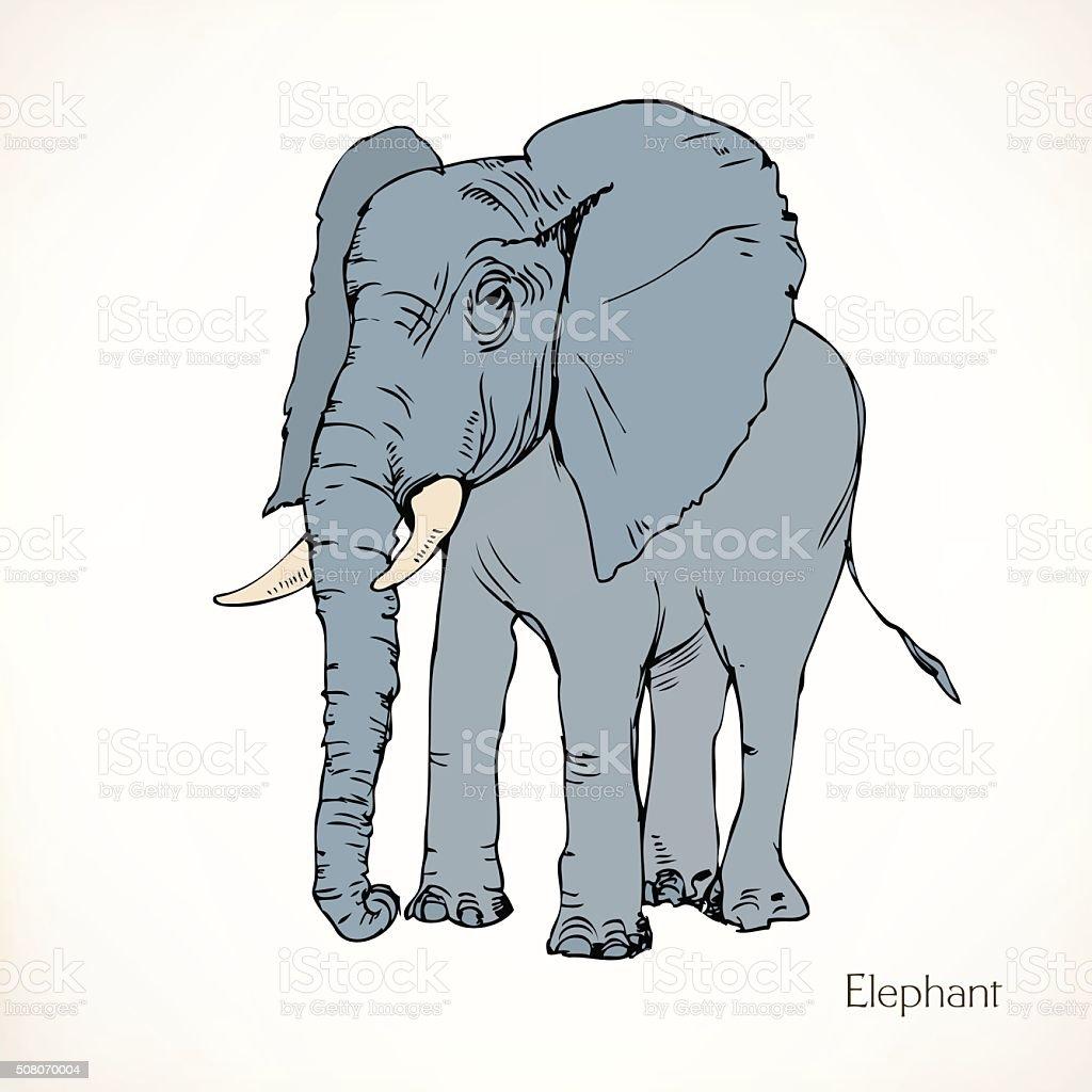 Elephant, vector animal vector art illustration