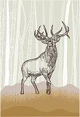 Elk in the Grasslands Forest