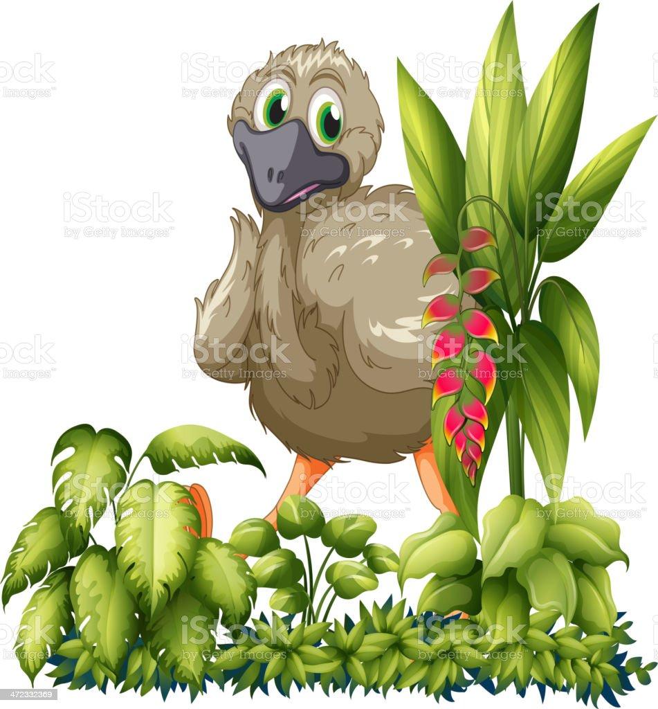 Emu hiding royalty-free stock vector art