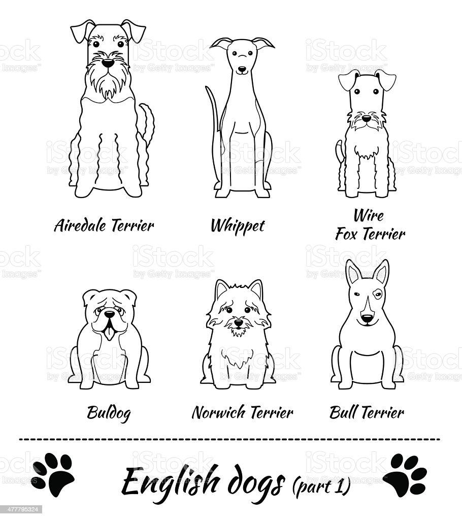 English dogs vector art illustration