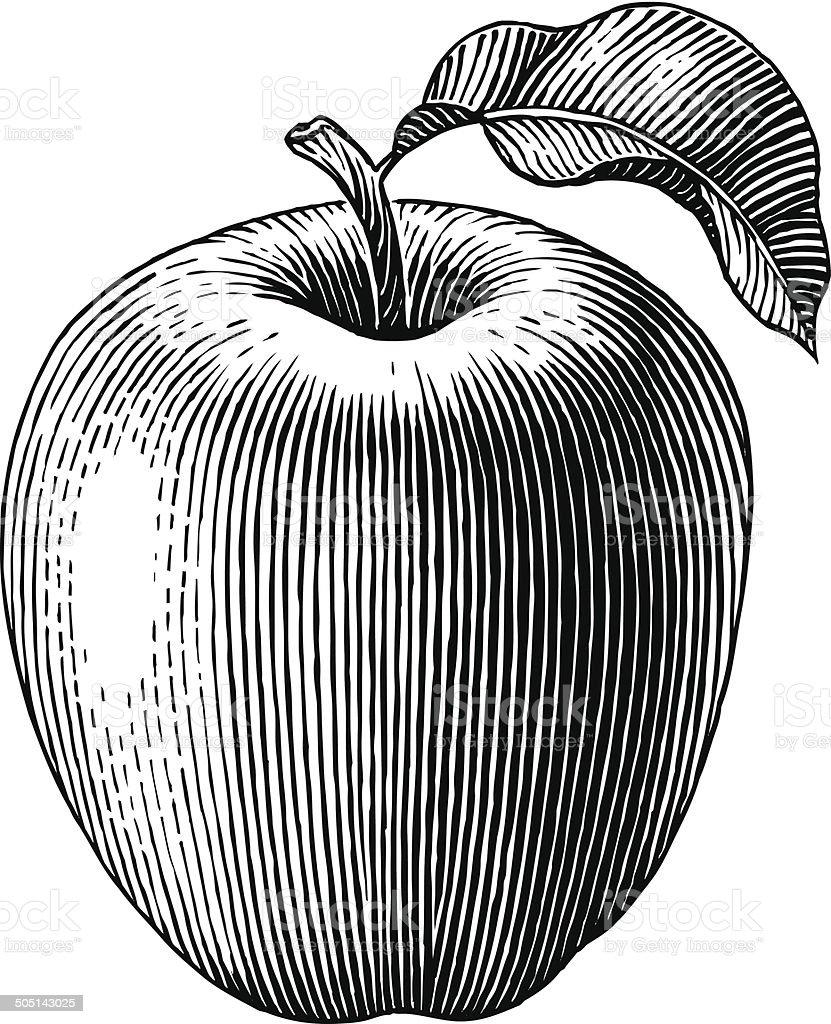 Engraved apple vector art illustration