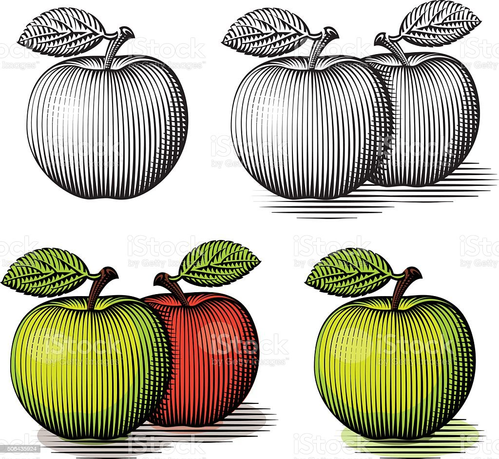 Engraved green and red apple. vector art illustration