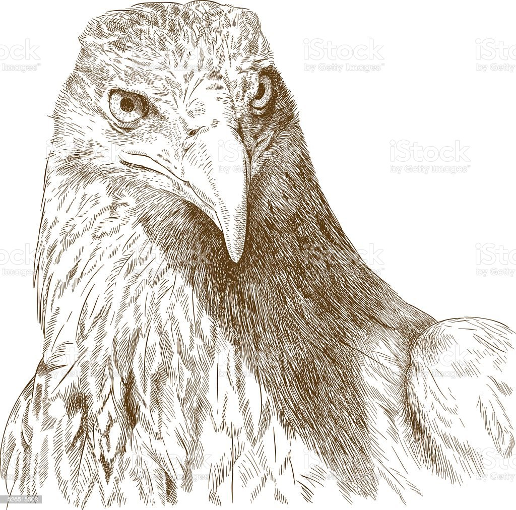 engraving illustration of big eagle head stock vector art