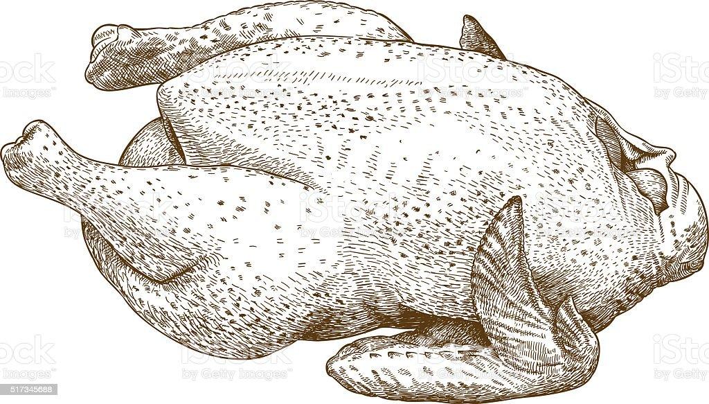 engraving illustration of raw chicken vector art illustration