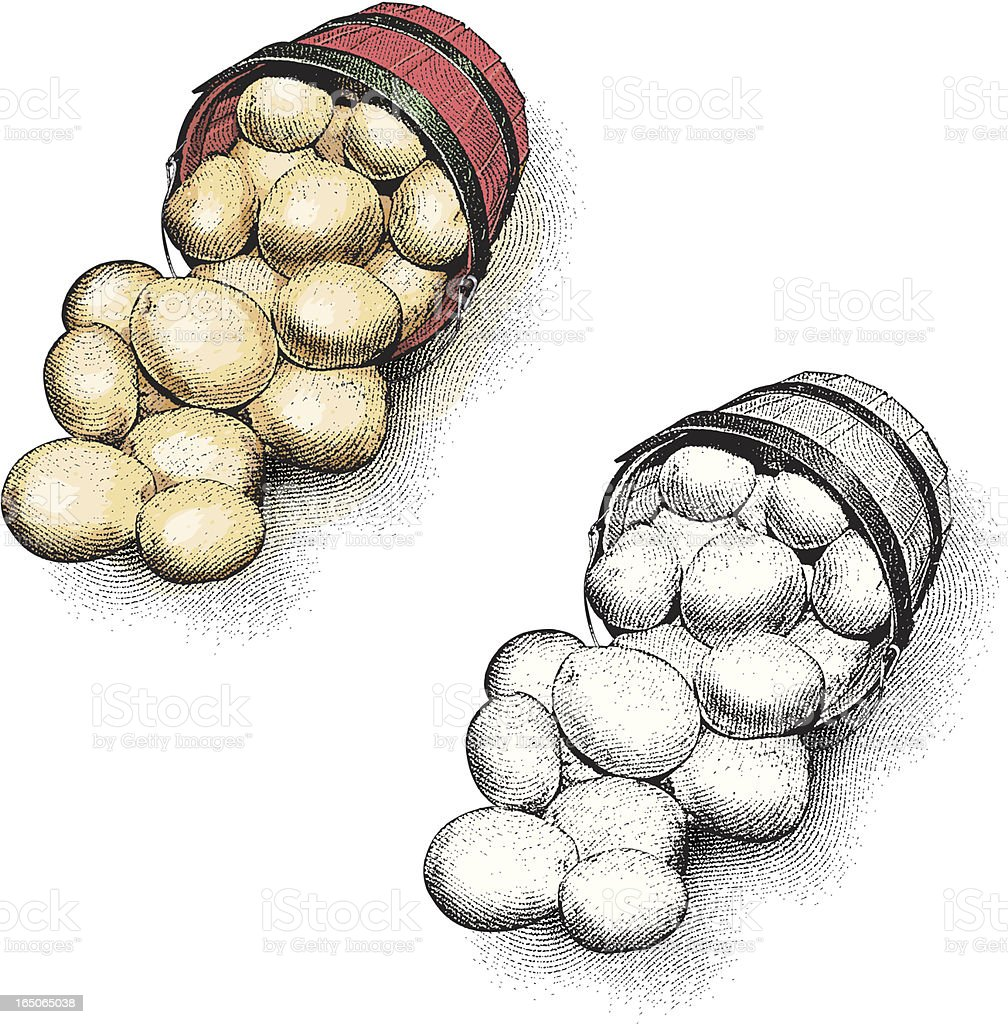 Engraving of Potatoes royalty-free stock vector art