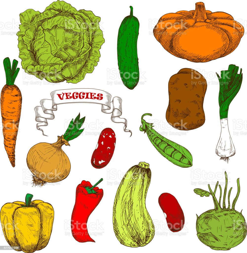 Engraving sketches of healthful organic vegetables vector art illustration
