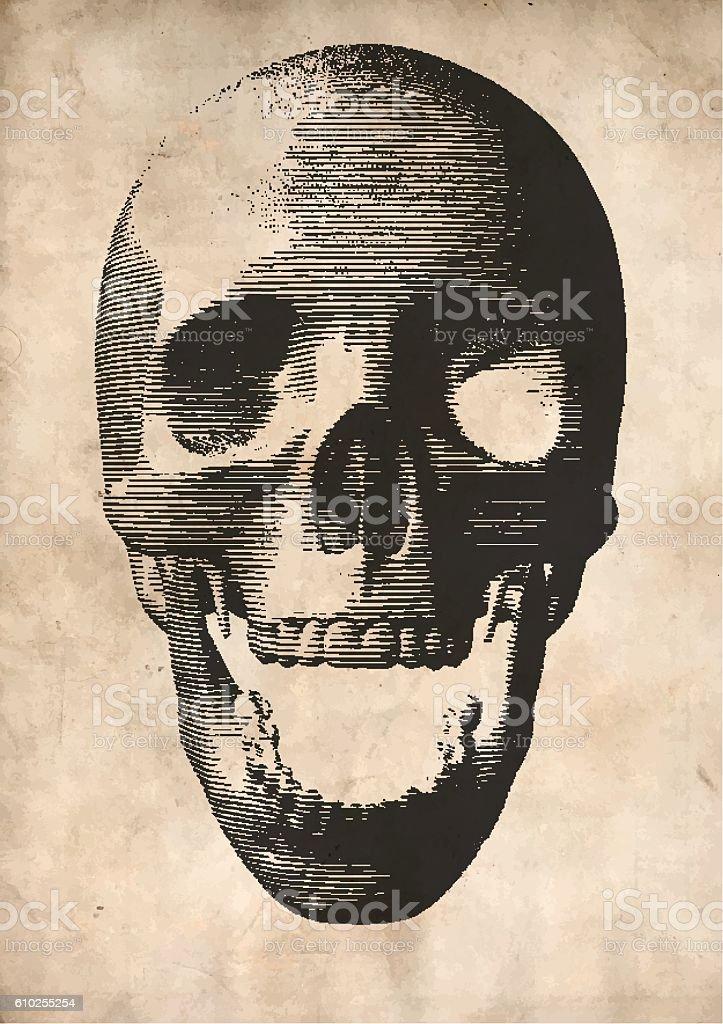 Engraving vector skull on old paper background vector art illustration
