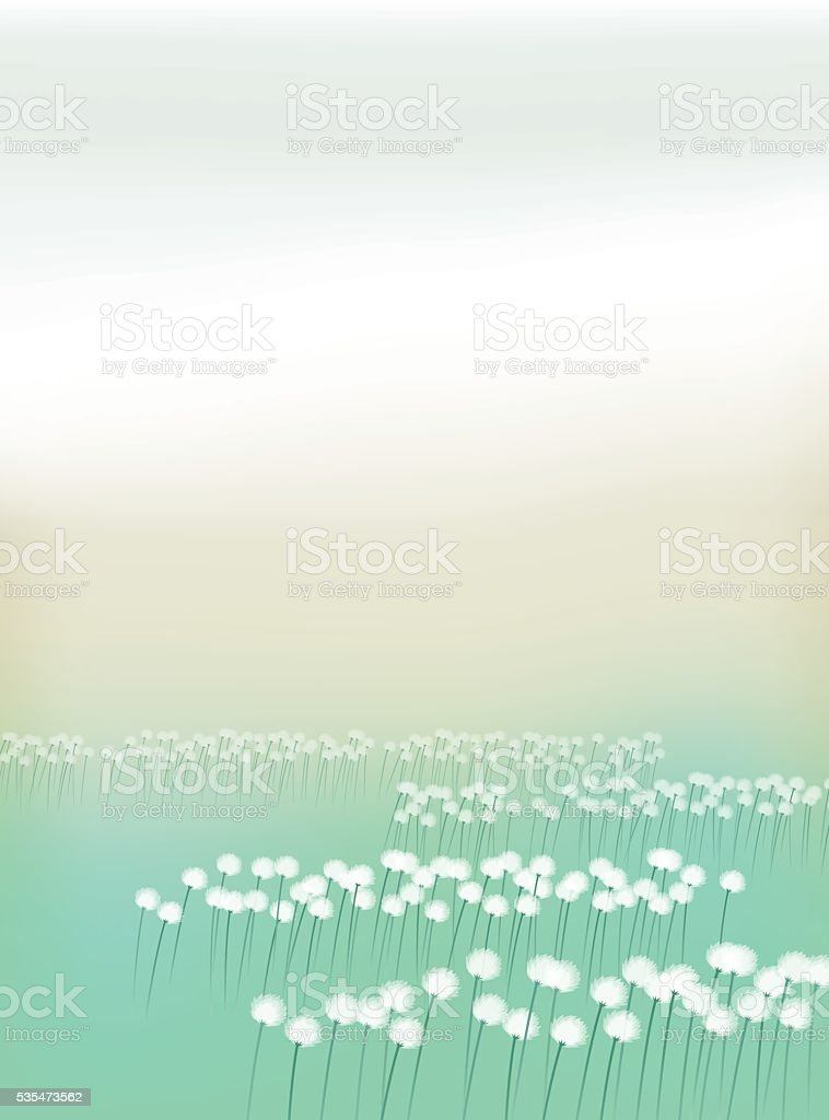 Eriophorum vaginatum.Field of cotton grass. vector art illustration