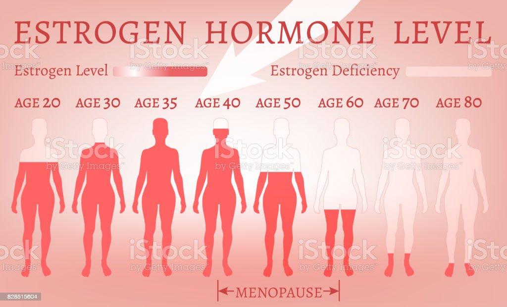 Estrogen Hormone Level vector art illustration