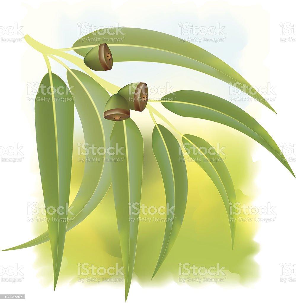 Eucalyptus branch. royalty-free stock vector art