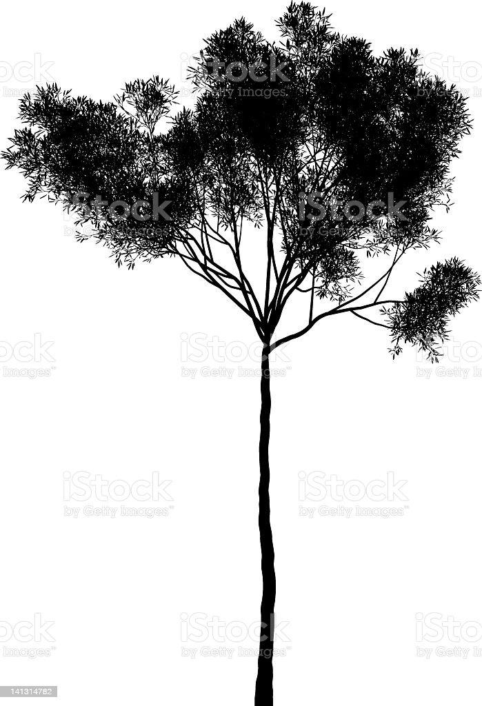 Eucalyptus collina royalty-free stock vector art