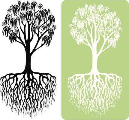 eukalyptusbaum vektorgrafiken und illustrationen istock. Black Bedroom Furniture Sets. Home Design Ideas