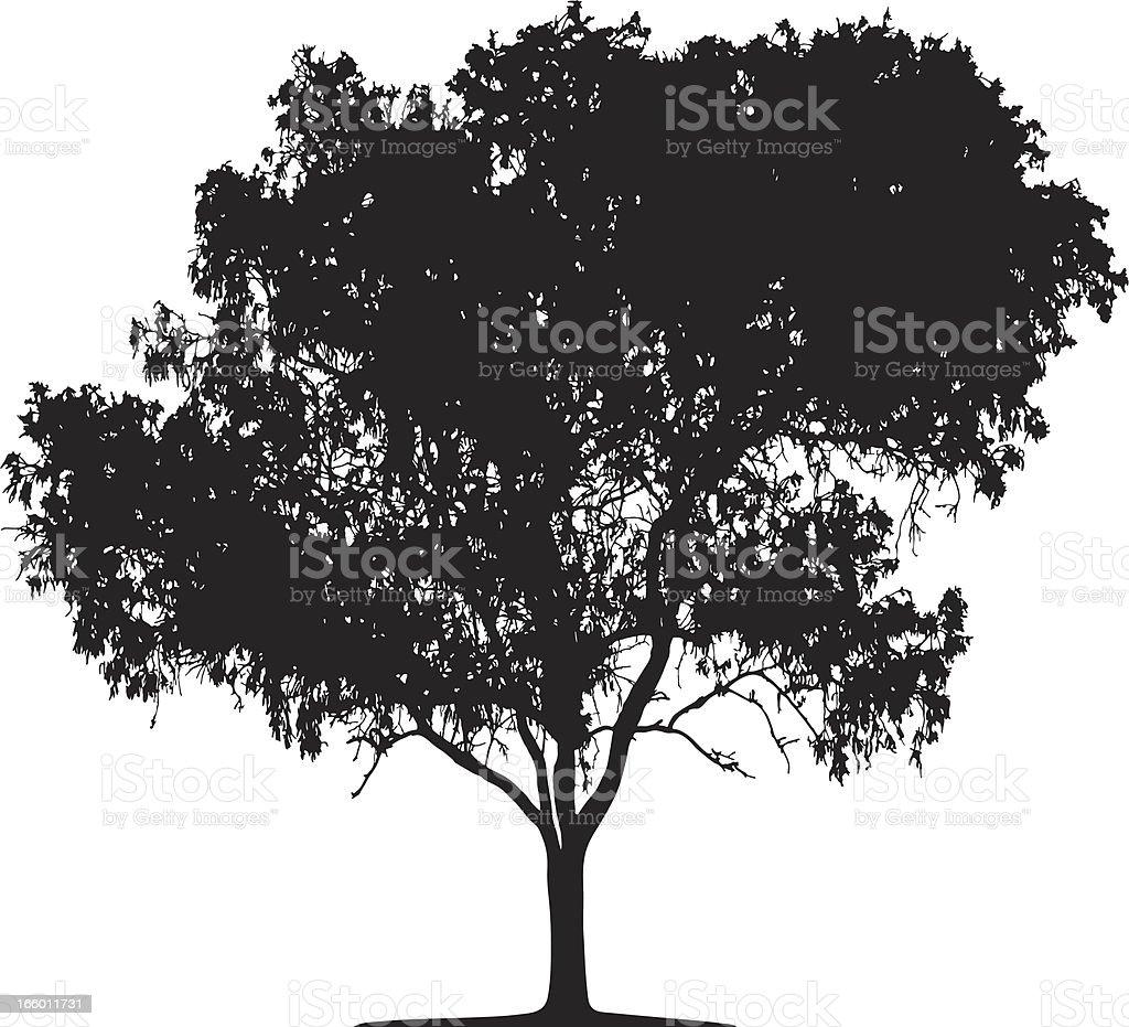 Eucalyptus tree silhouette, Vector royalty-free stock vector art