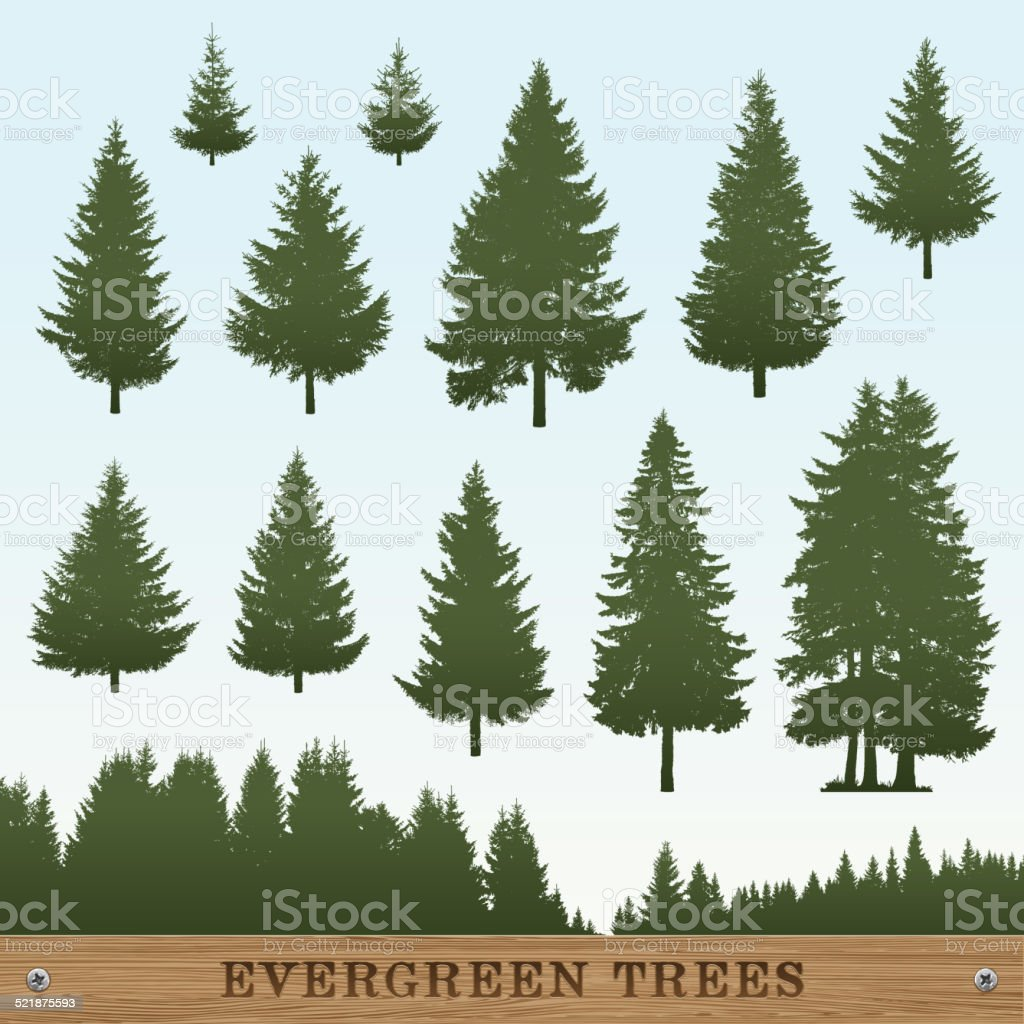 Evergreen Tree Silhouettes vector art illustration