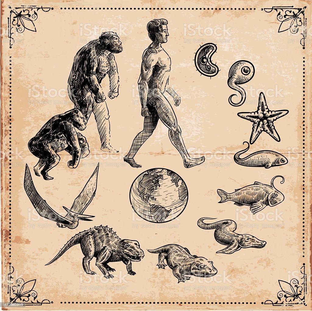 Evolution of Life vector art illustration