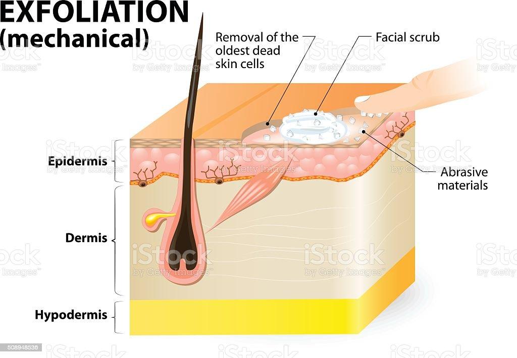Exfoliation. cosmetology vector art illustration