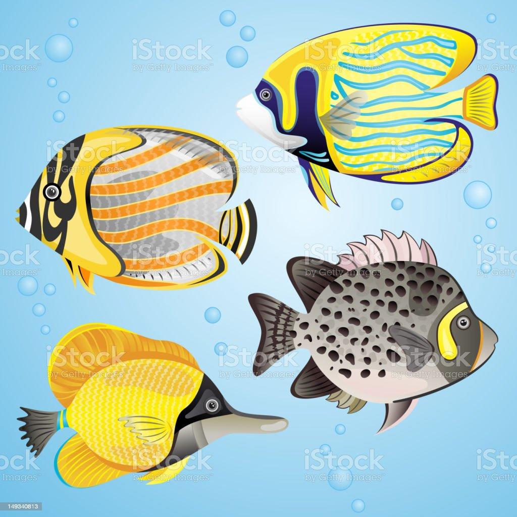 Exotic fish set royalty-free stock vector art