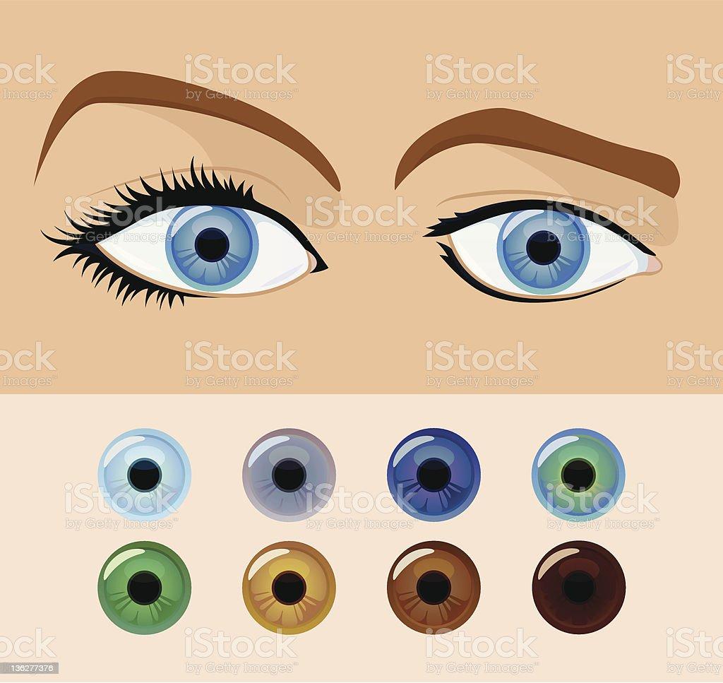 Eye colors vector art illustration