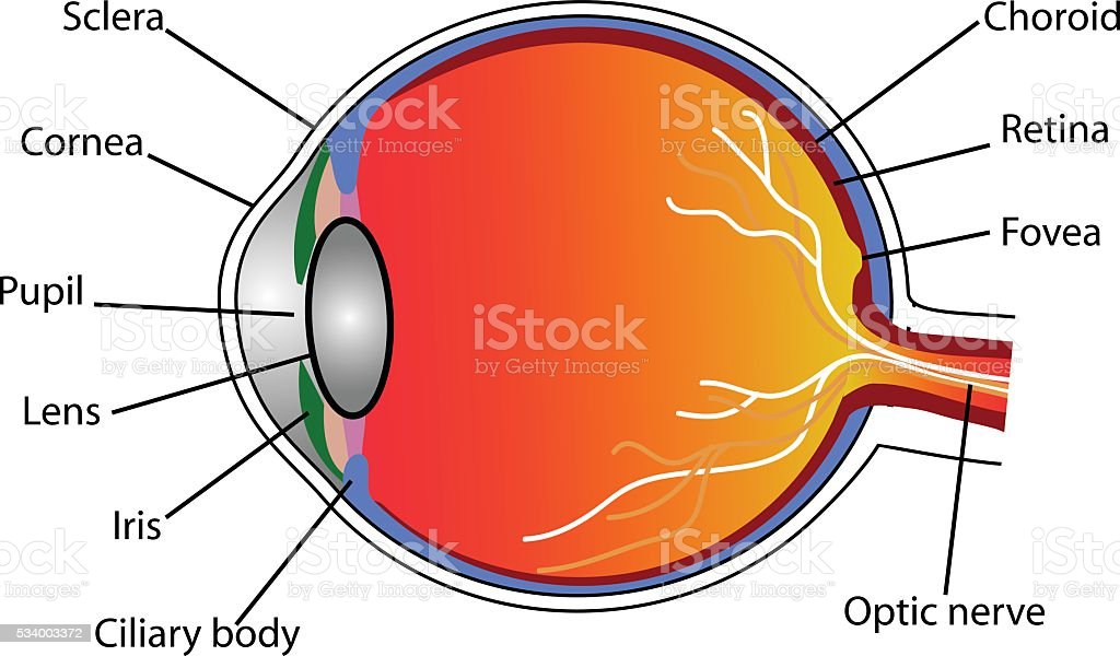 eye vector art illustration