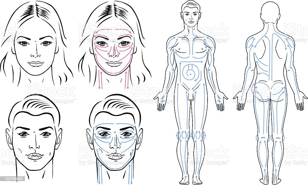 Facial, body massaging lines for man and woman. royalty-free stock vector art