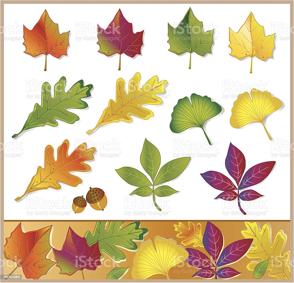 Fall and Summer Leaves vector art illustration