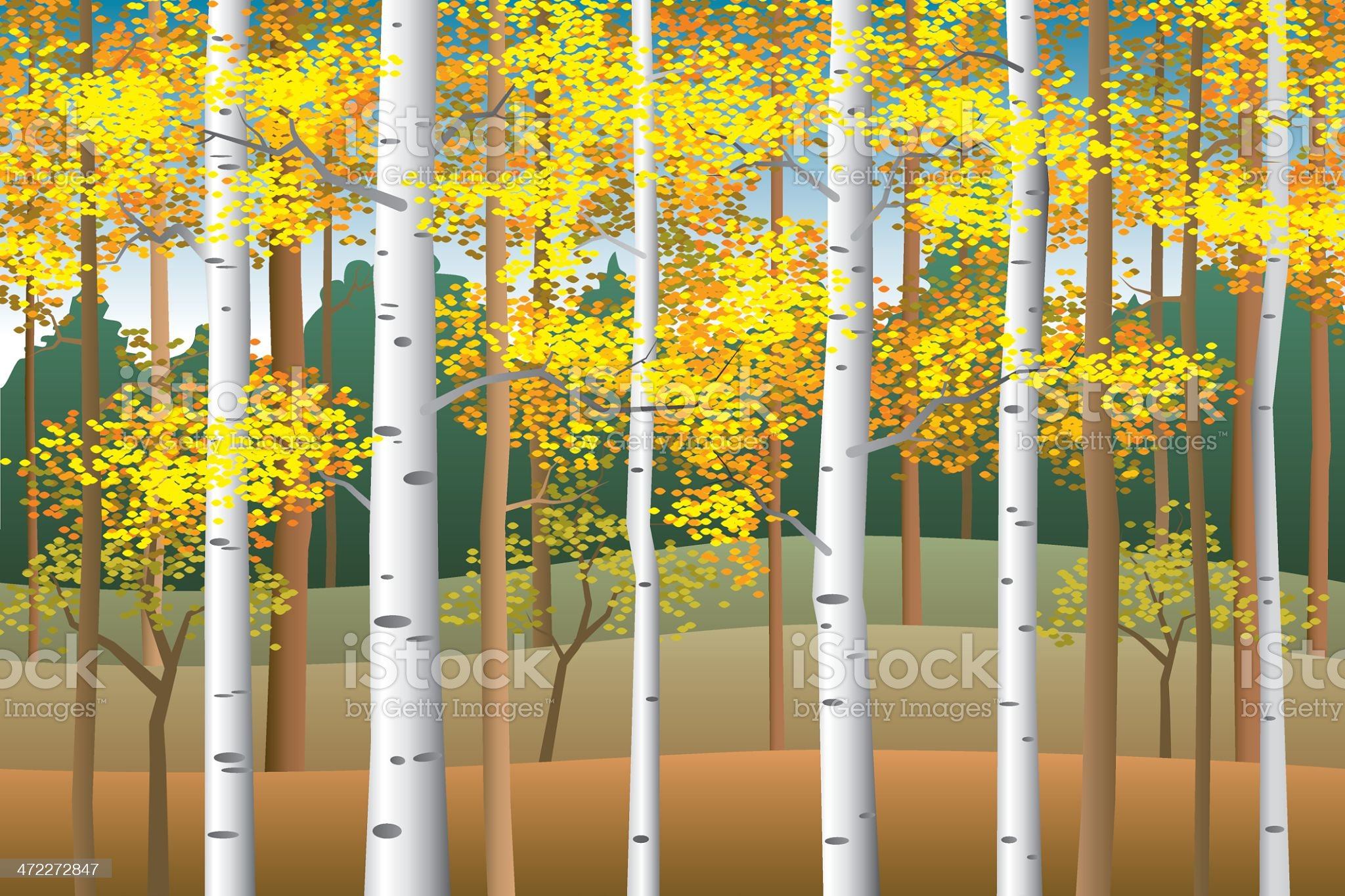 Fall birches royalty-free stock vector art