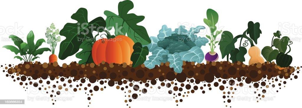 Fall Harvest Garden vector art illustration