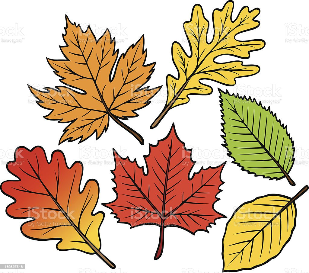 Fall Leaf Collection royalty-free stock vector art