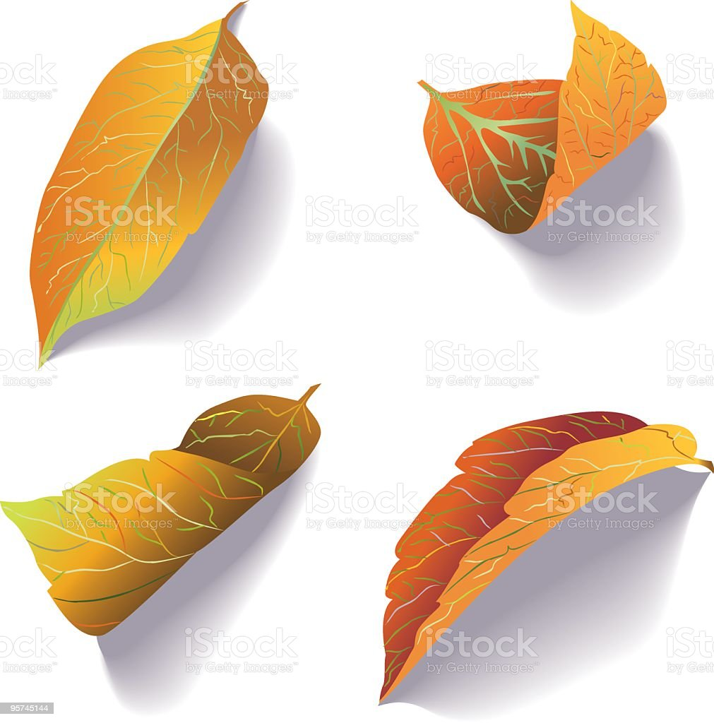 Fall Leaf Icons royalty-free stock vector art
