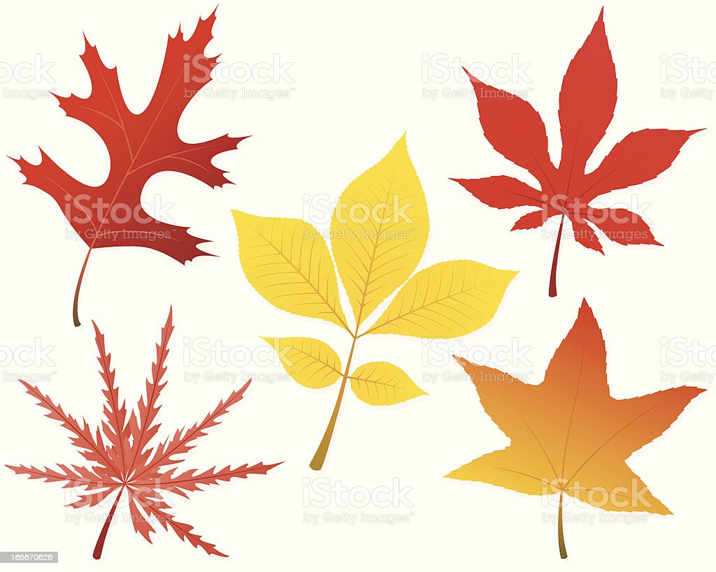Fall Leaves vector art illustration