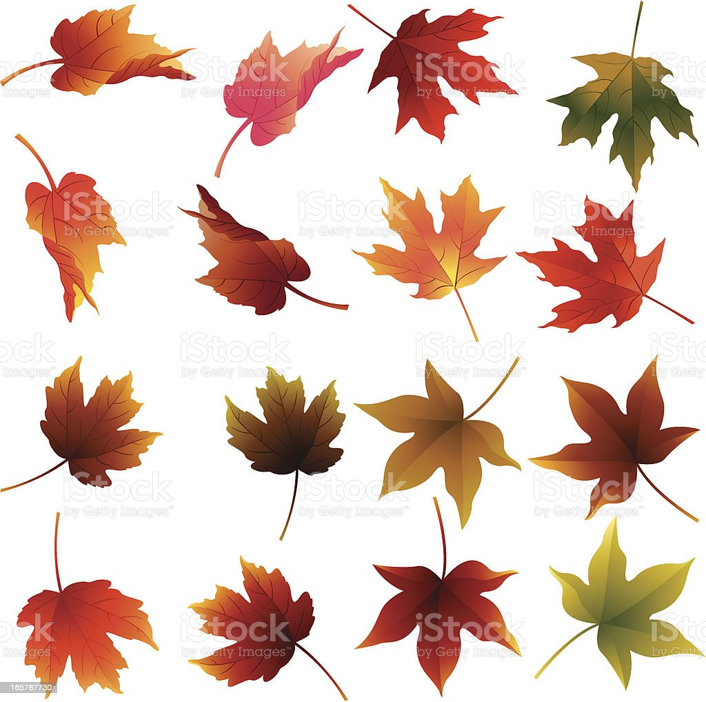 Fall Leaves vector art illustration