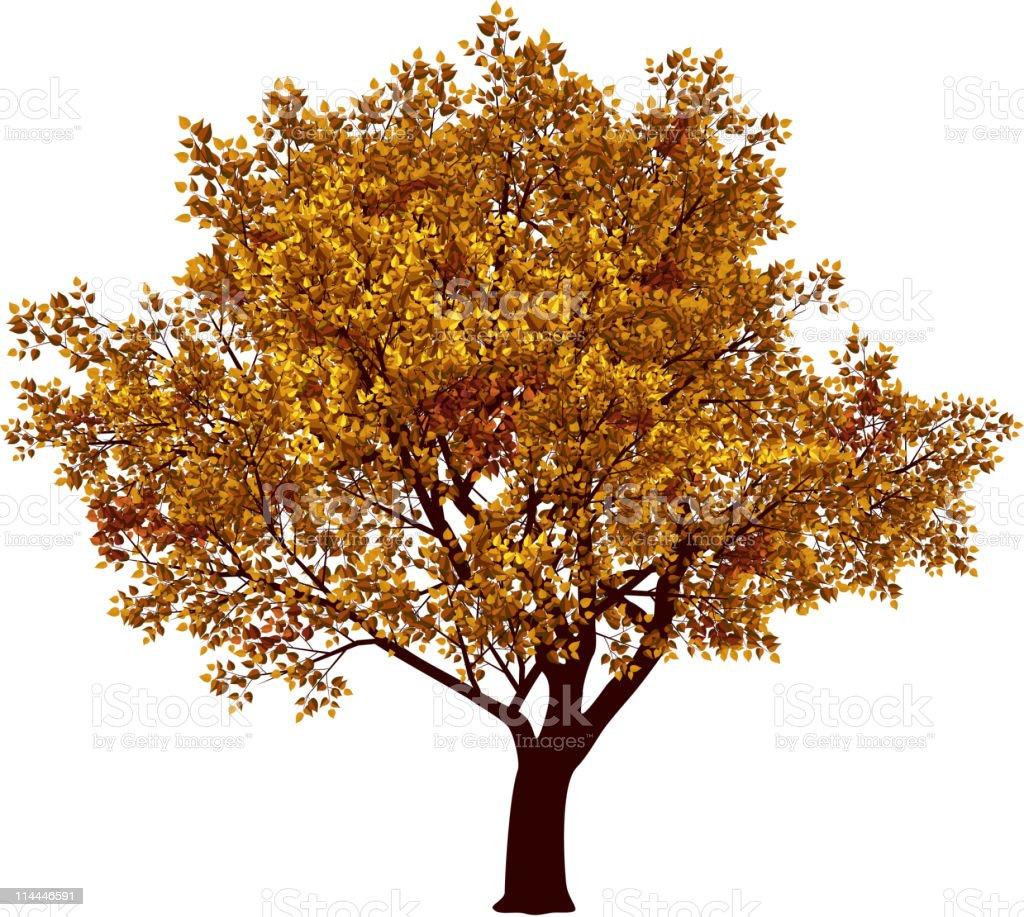 Fall tree royalty-free stock vector art