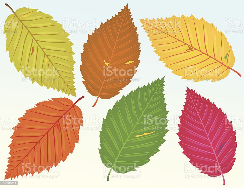 Fallen Beech Leaves royalty-free stock vector art